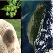 臺灣生物多樣性